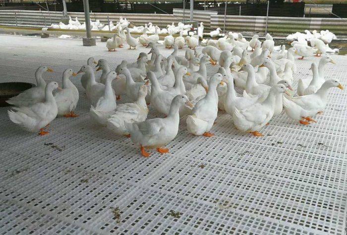 duck plastic slat floor